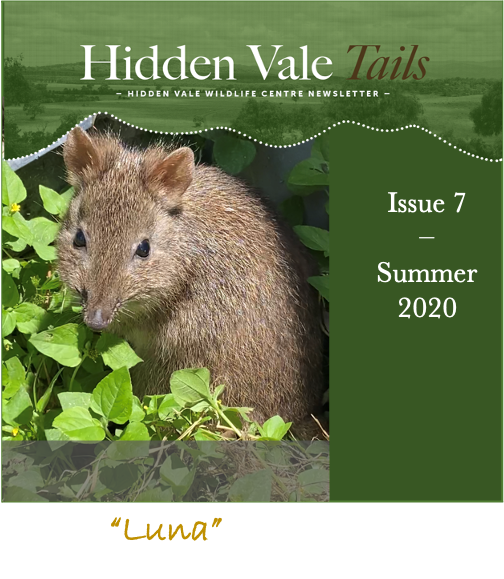 Hidden Vale Tales Issue 7 cover