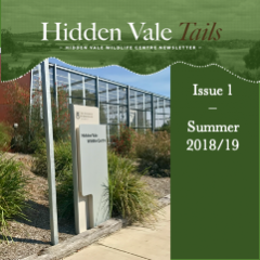 Hidden Vale Tails Issue 2 Summer 2018
