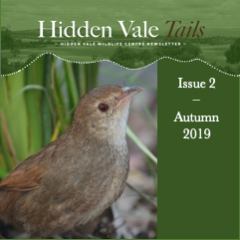 Hidden Vale Tails Issue 2 Autumn 2019