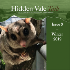 Hidden Vale Tails Issue 3 Winter 2019