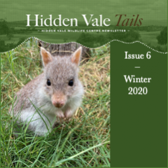 Hidden Vale Tails Issue 6 Winter 2020